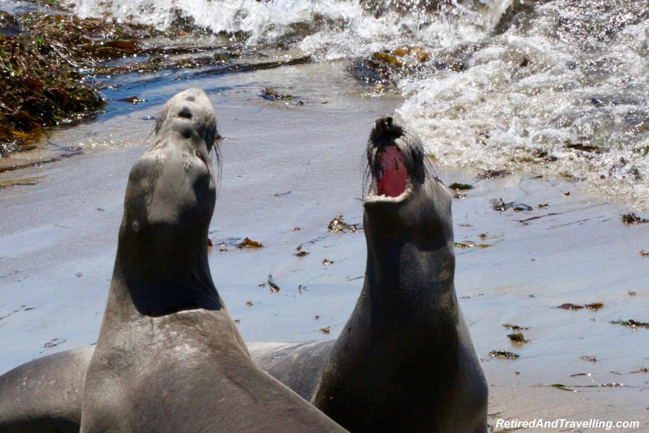 PCH San Simeon Elephant Seals - Visit Carmel and Monterey.jpg