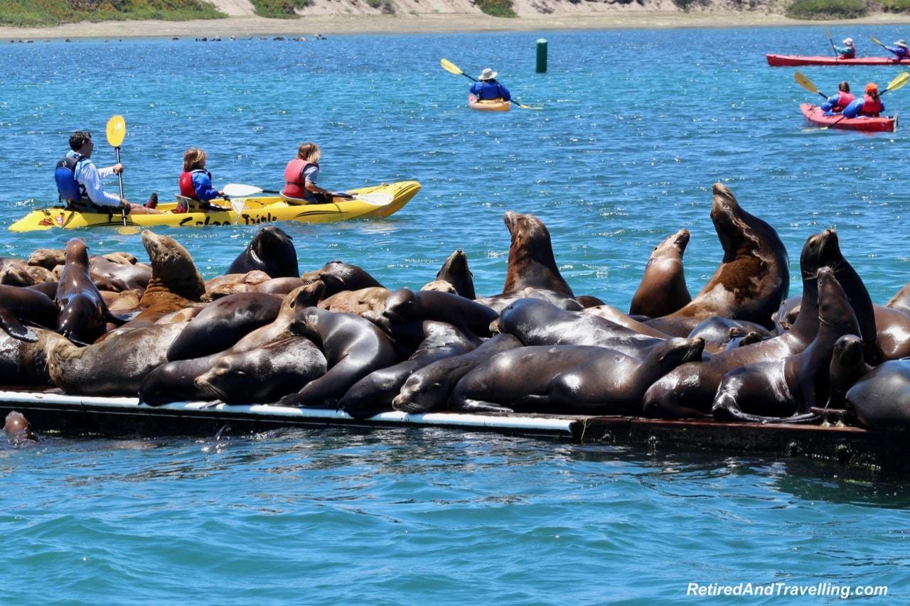 Sea Lions Monterey.jpg