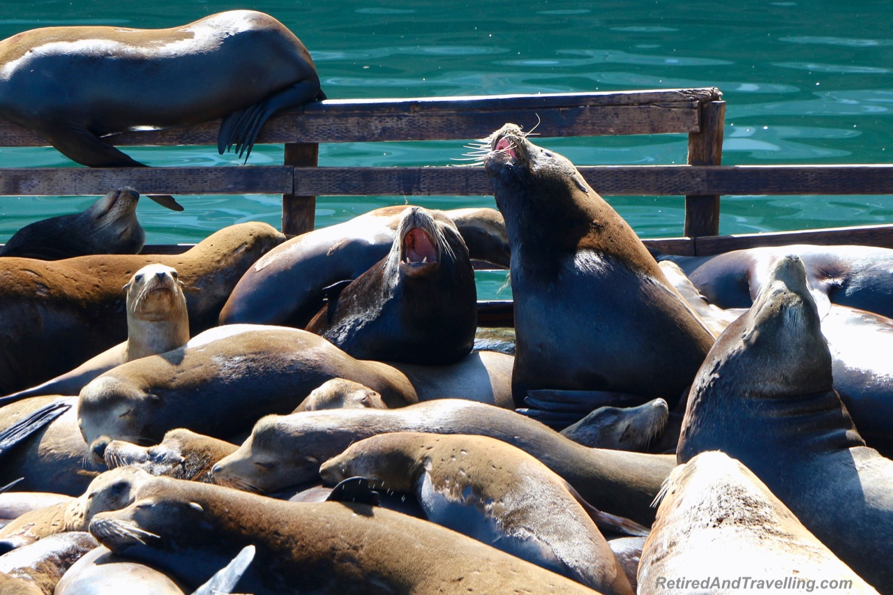 Fisherman's Wharf Seal Lions - Visit Carmel and Monterey.jpg
