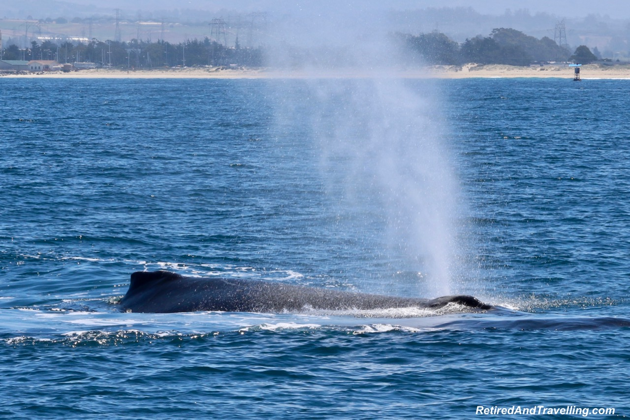 Whale Blow Spout - Whale Tales in Monterey.jpg