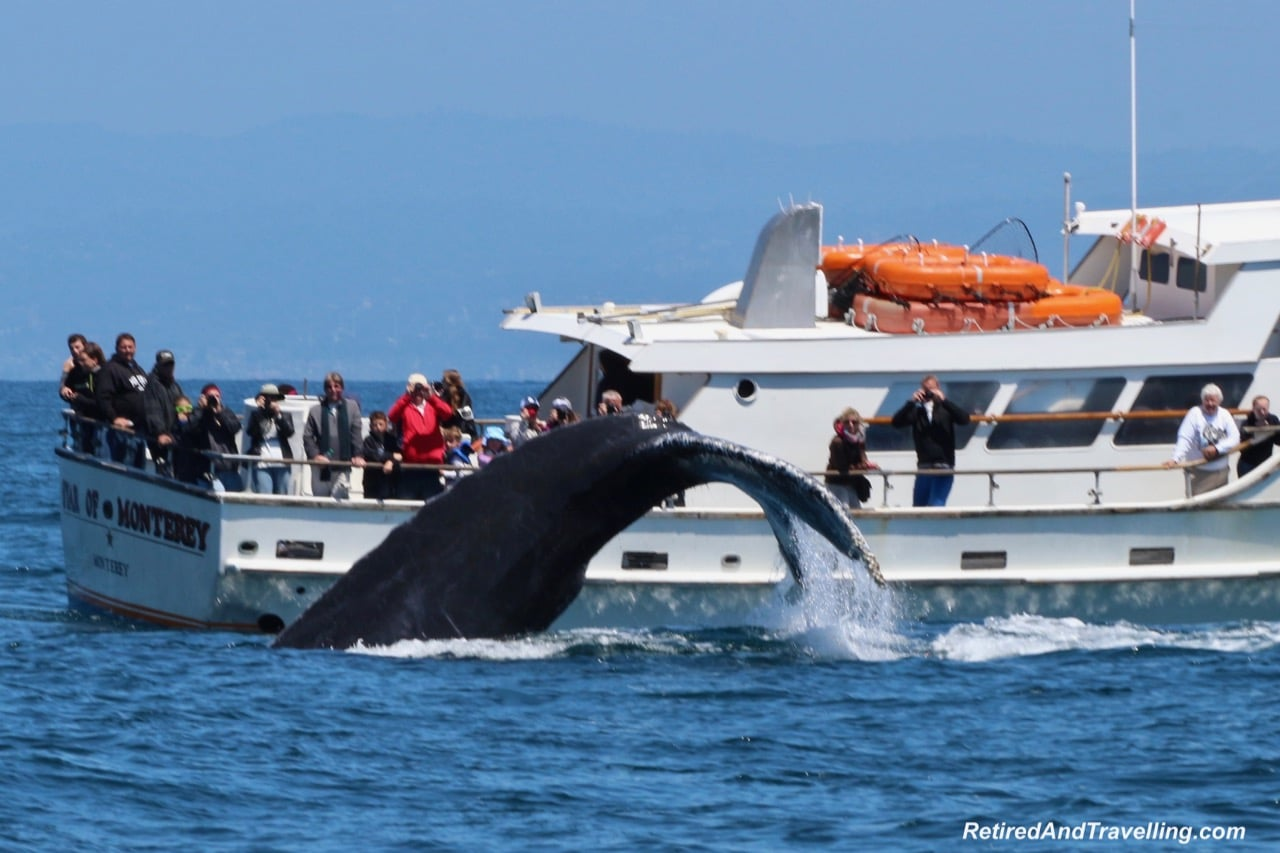 Whale Tales in Monterey.jpg