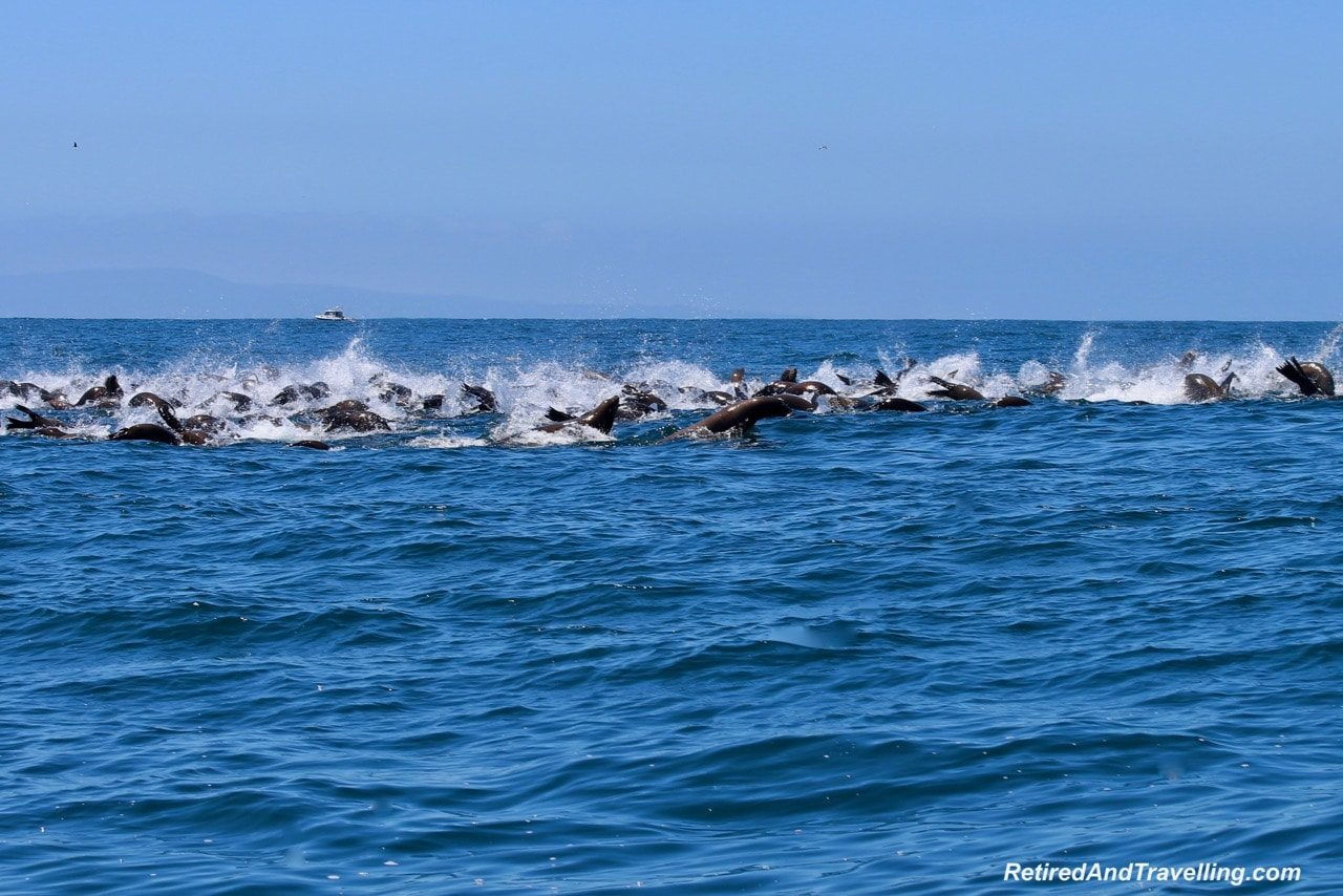 Harbour Seals in Monterey.jpg