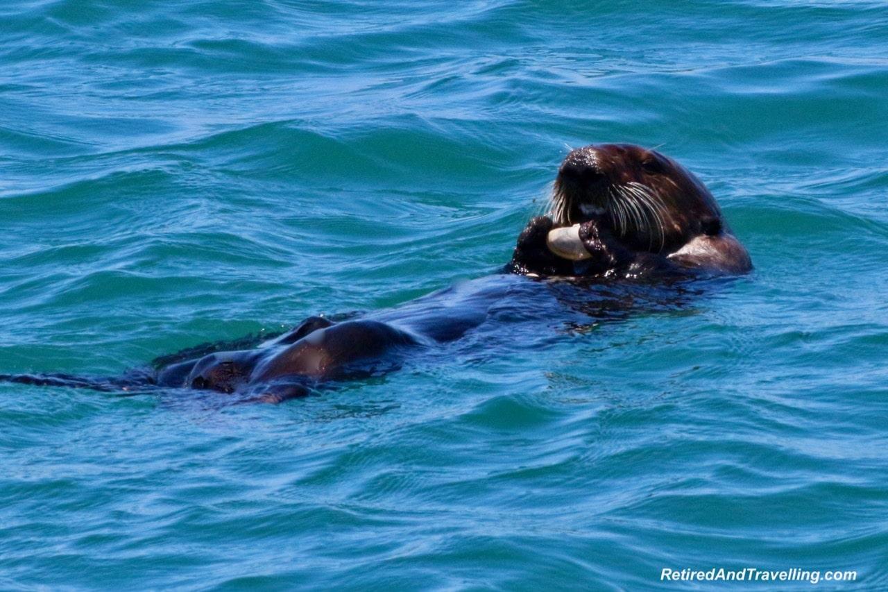 Sea Otters in Monterey.jpg