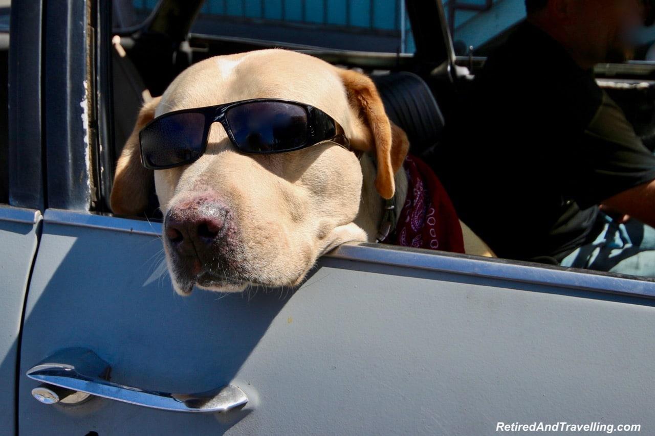 Dog days in Santa Barbara. jpg