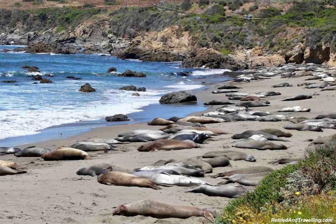 Monterey Elephant Seals.jpg