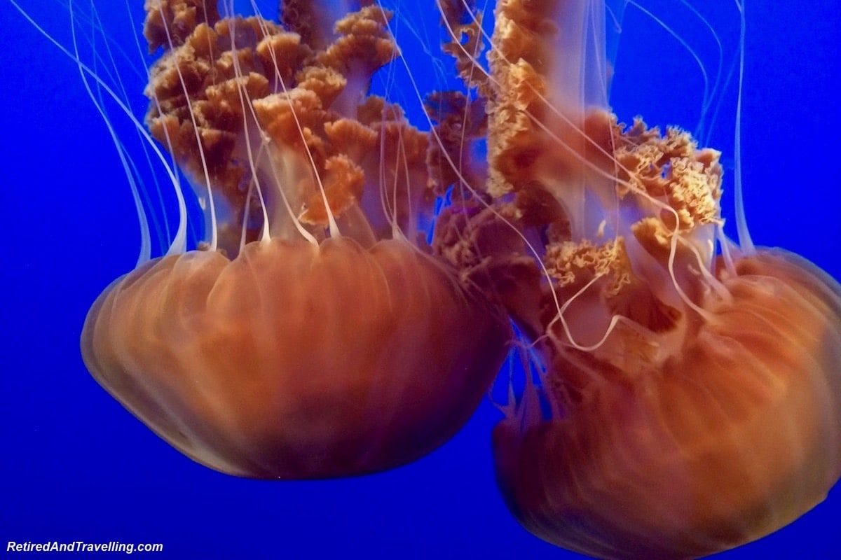 Monterey Aquarium Jelly Fish - travelling the PCH.jpg
