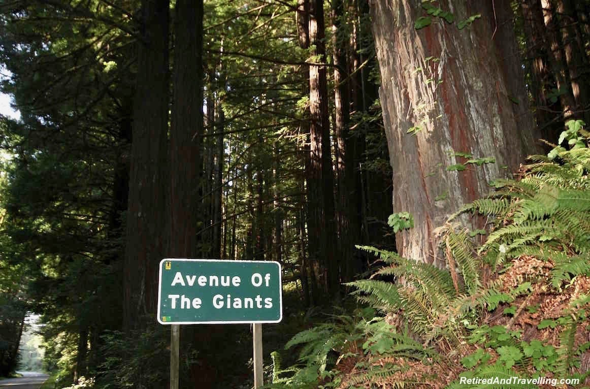 Avenue of Giants California - travelling the PCH.jpg.jpg