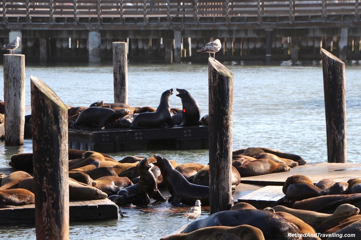 Sea Lions on the Pier - travelling the PCH.jpg