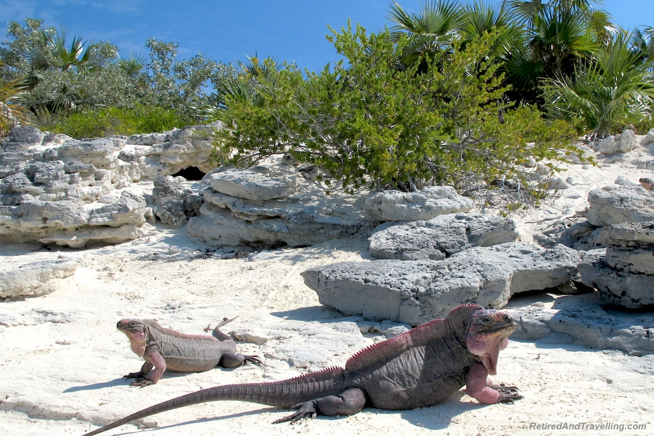 Iguana Island - Exuma swim with pigs.jpg