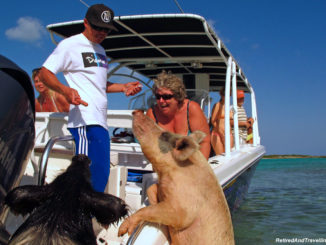 Exuma swim with pigs.jpg