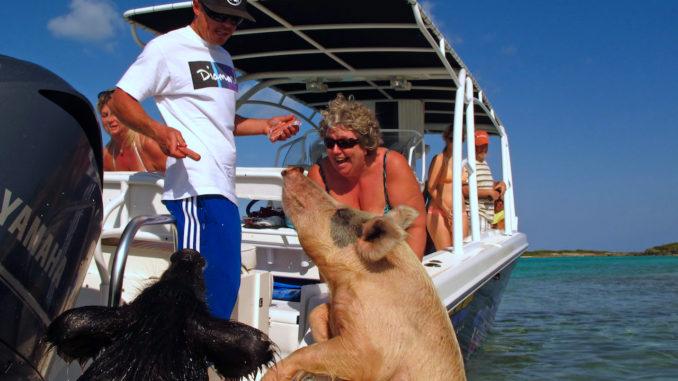 Exuma swim with pigs.jpg