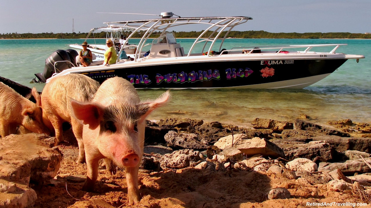 Pigs - Exuma swim with pigs.jpg