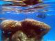Snorkel Ocean Atlas In Nassau.jpg