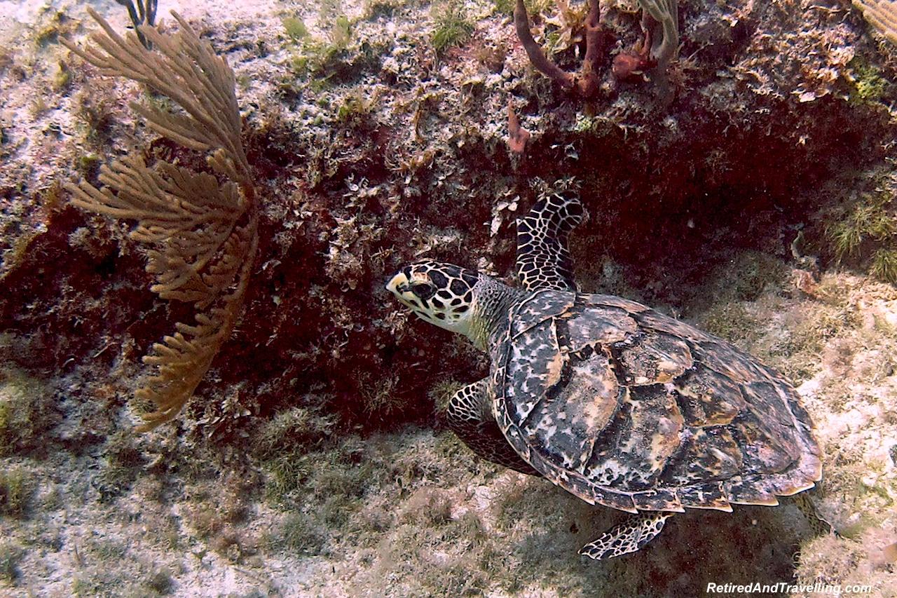 Scuba Diving - Sandals Emerald Bay - Valentines in Exuma.jpg