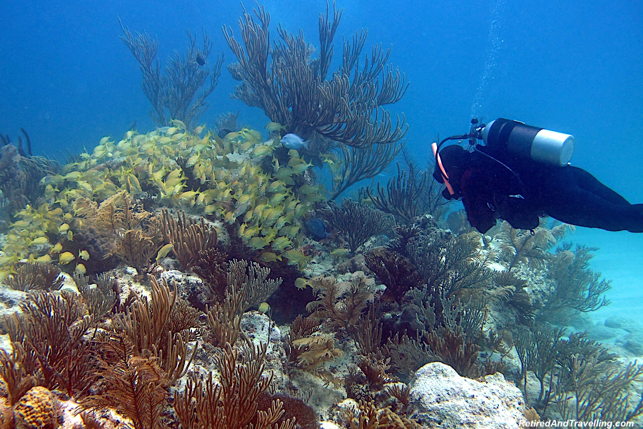 Scuba Diving Fish and Coral Exuma - Free Resort Scuba Diving.jpg