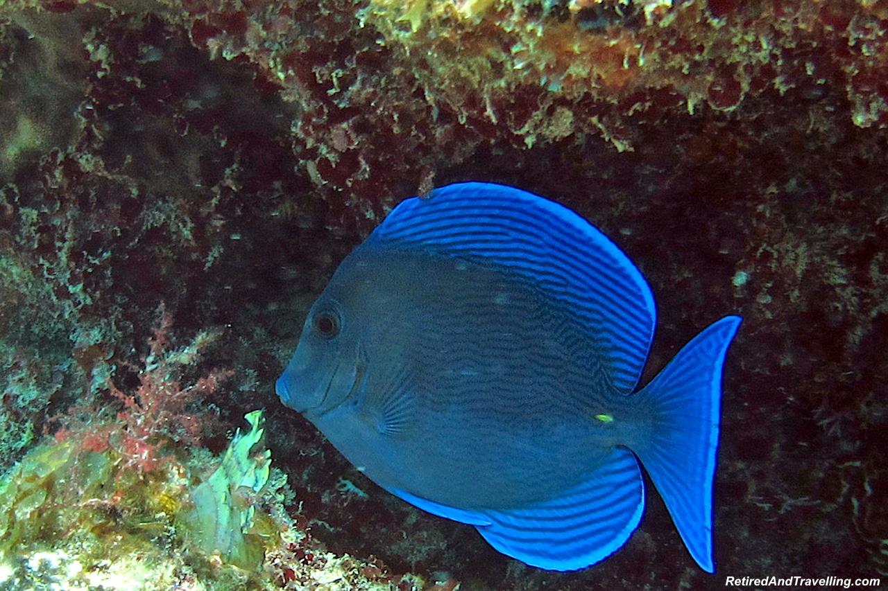 Scuba Diving Fish and Coral Exuma - Free Resort Scuba Diving.jpg