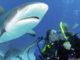Free Resort Scuba Diving.jpg