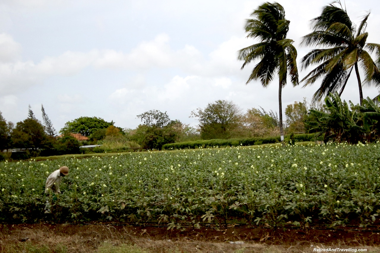Barbados Cotton - Barbados Quick Glimpse.jpg