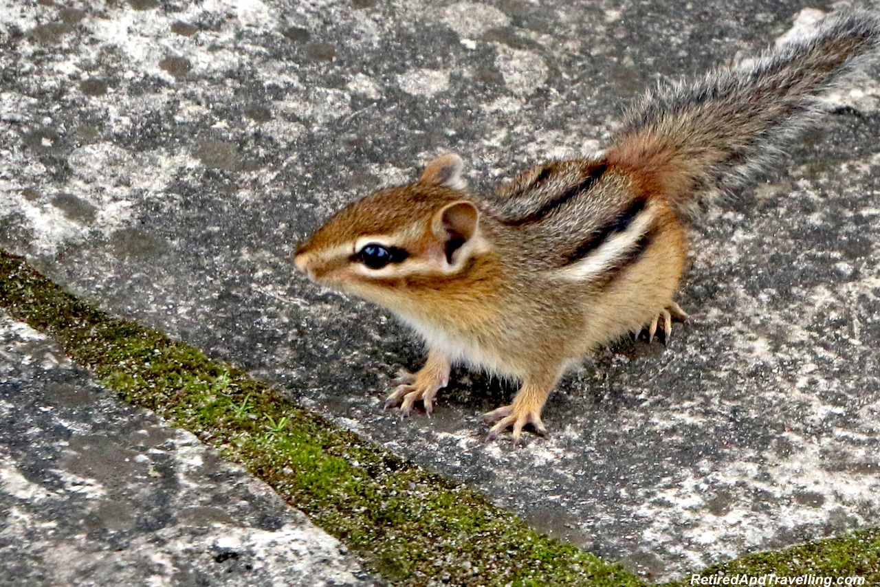 Small Animals - Toronto Cottage Country.jpg