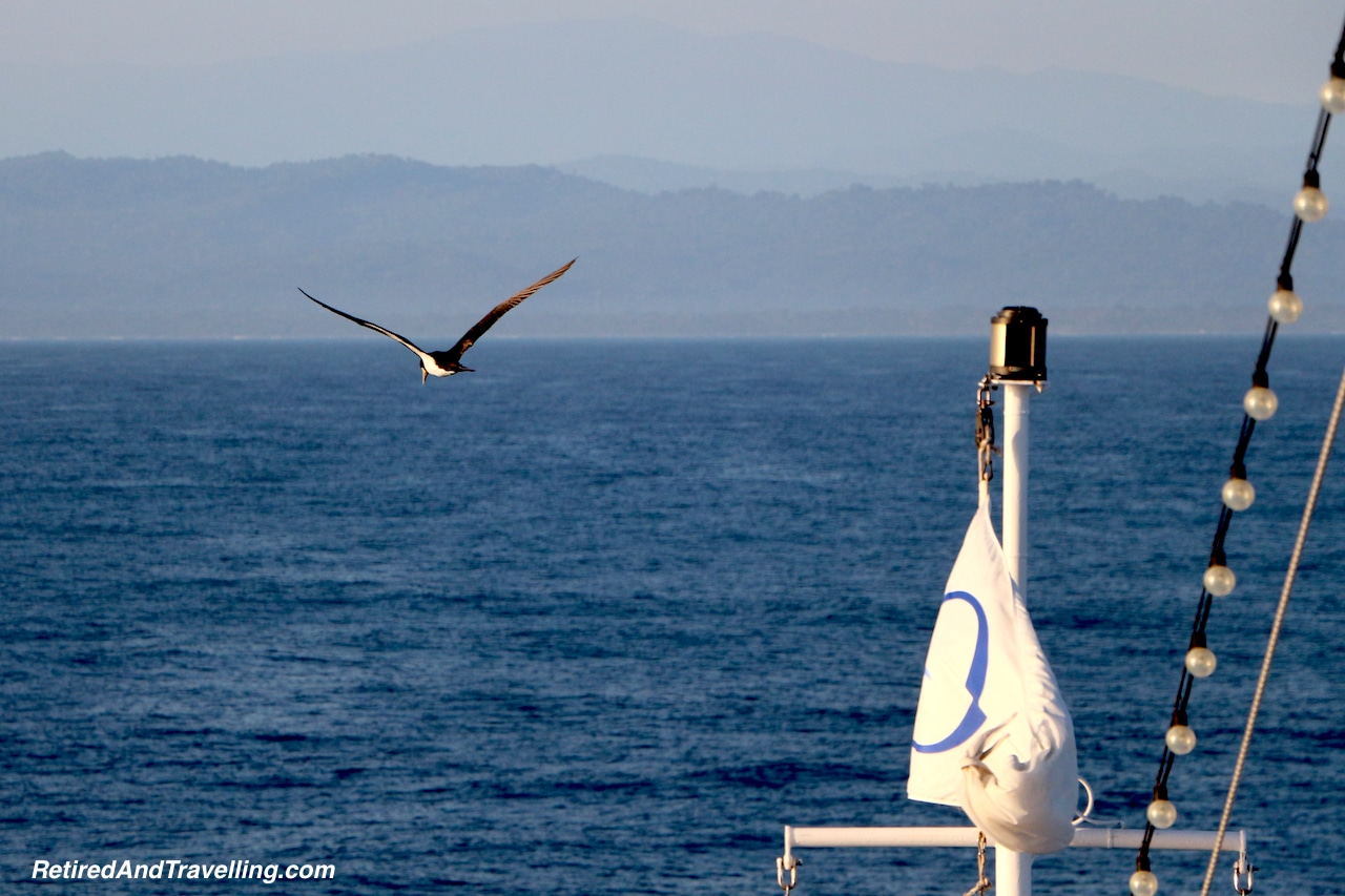 Welcomed By Birds - About The Caribbean.jpg