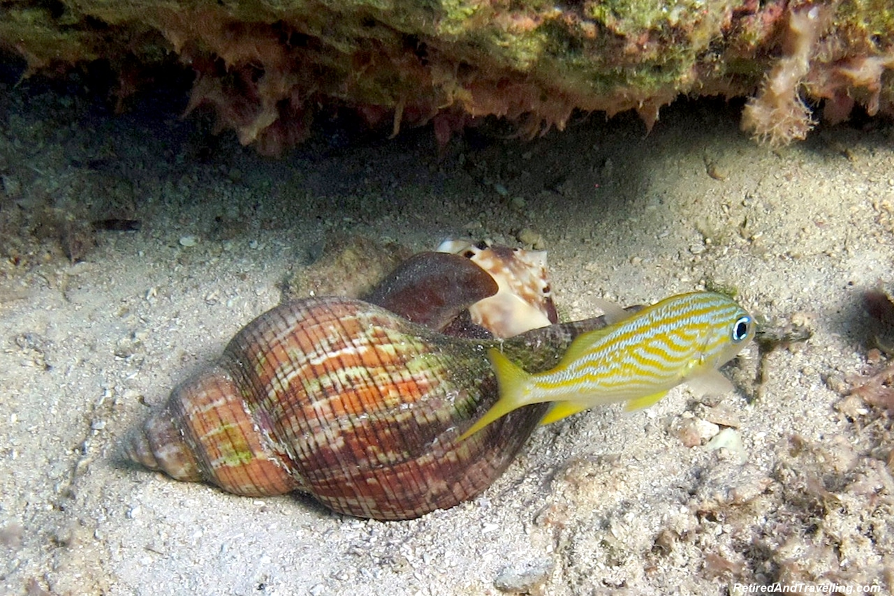 Fish on Cable Beach - Snorkel With Turtles.jpg