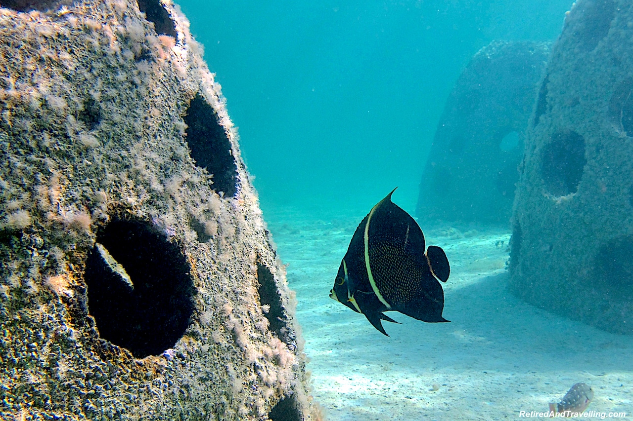 Eco Reef on Cable Beach - Snorkel With Turtles.jpg