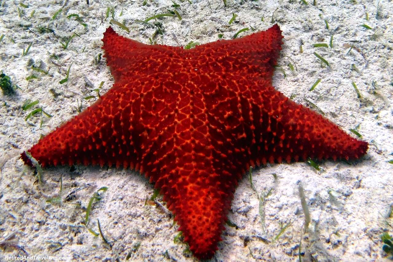 Star Fish on Cable Beach - Snorkel With Turtles.jpg