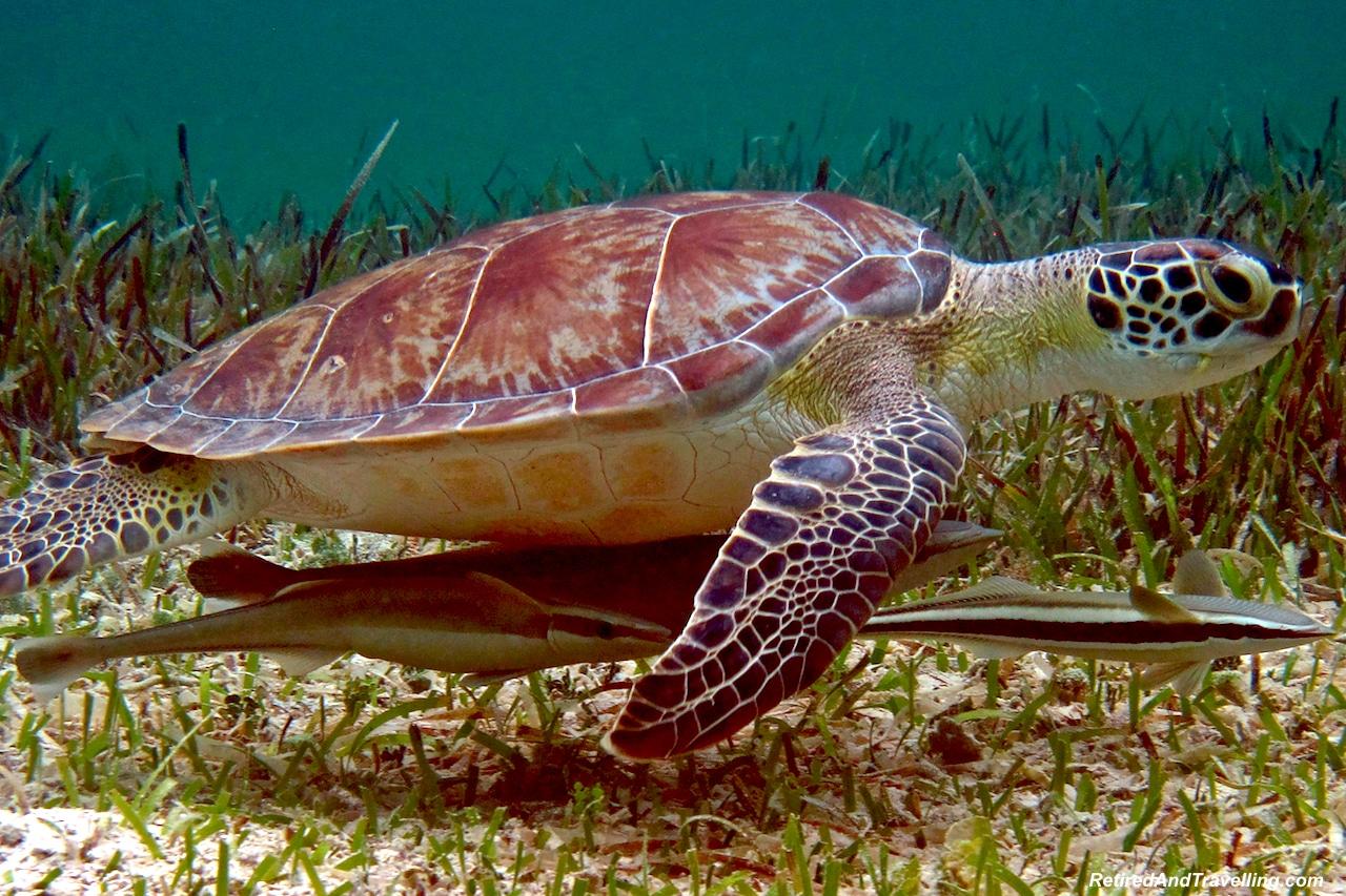Turtles - Snorkel With Turtles.jpg