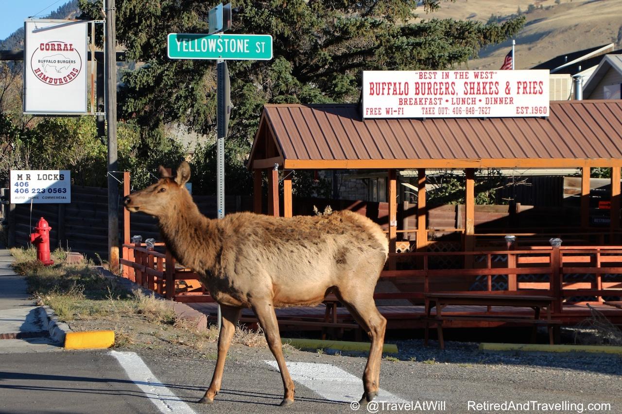 More Than Geysers in Yellowstone.jpg