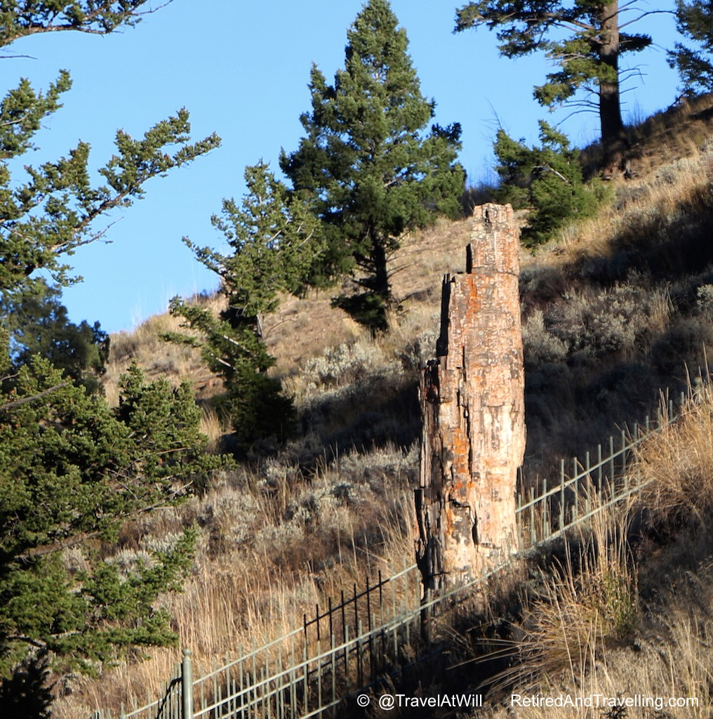 Petrified Tree - More Than Geysers in Yellowstone.jpg