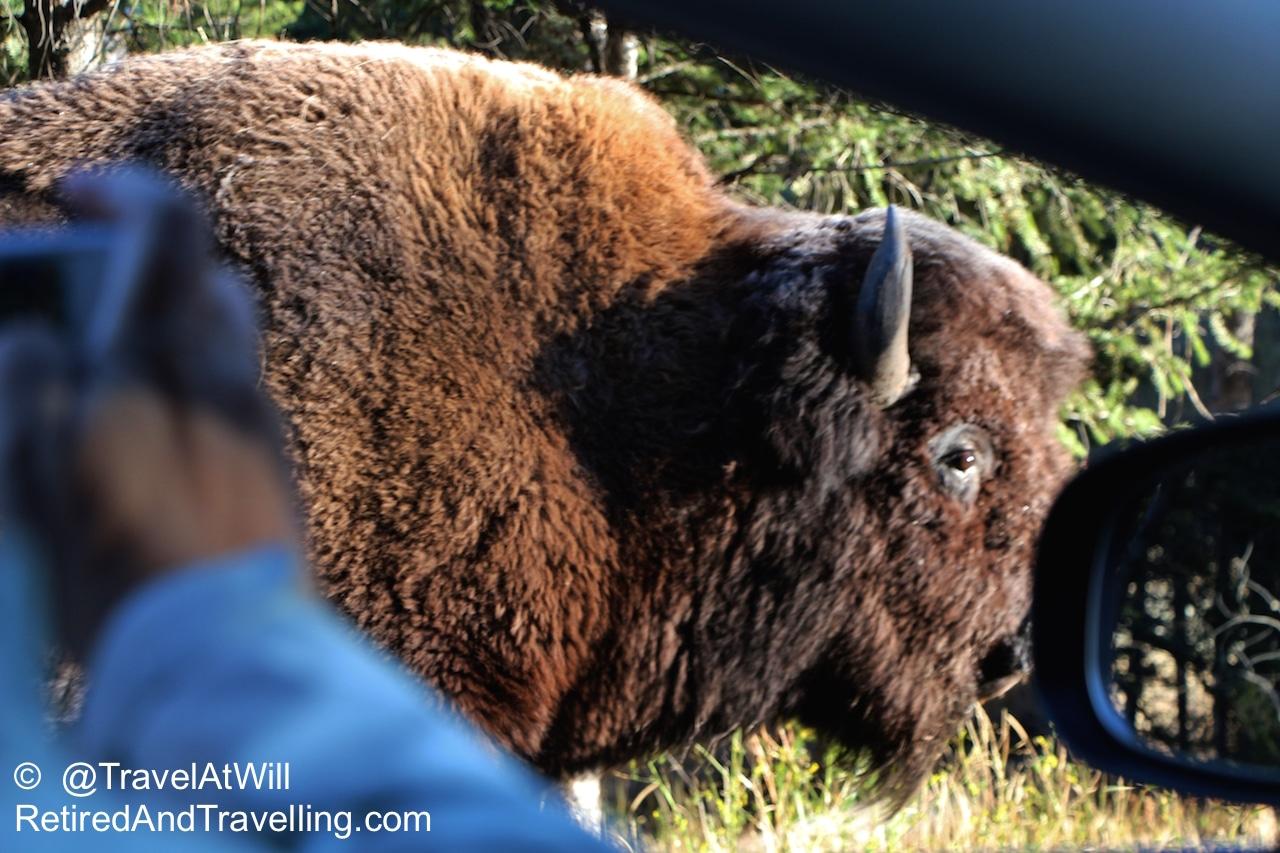 Buffalo2-2015-10-24-20-38.jpg