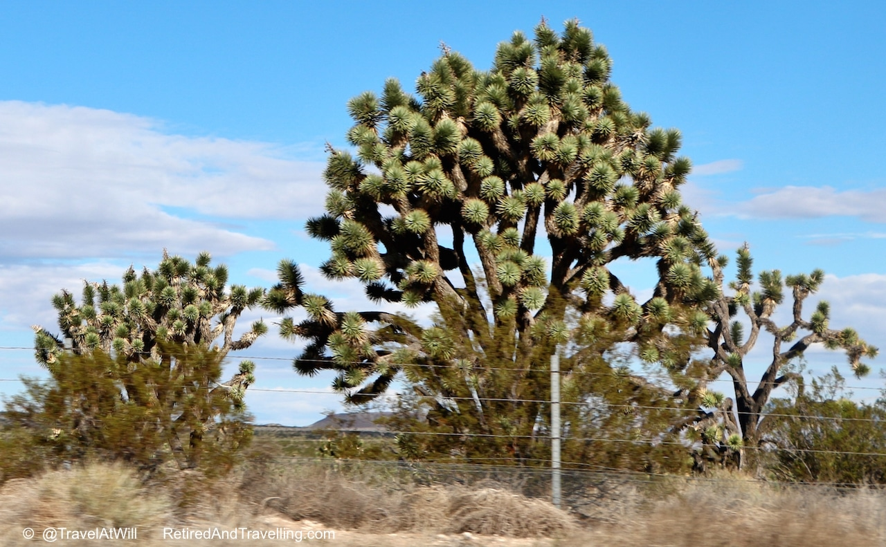 Cactus in Mojave desert leaving - Las Vegas glitter.jpg