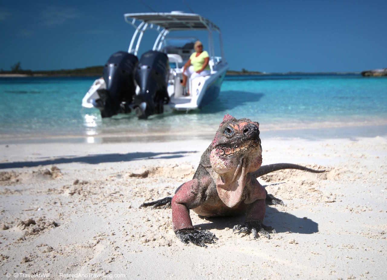Iguana Island - 2015 Blog Favourites.jpg