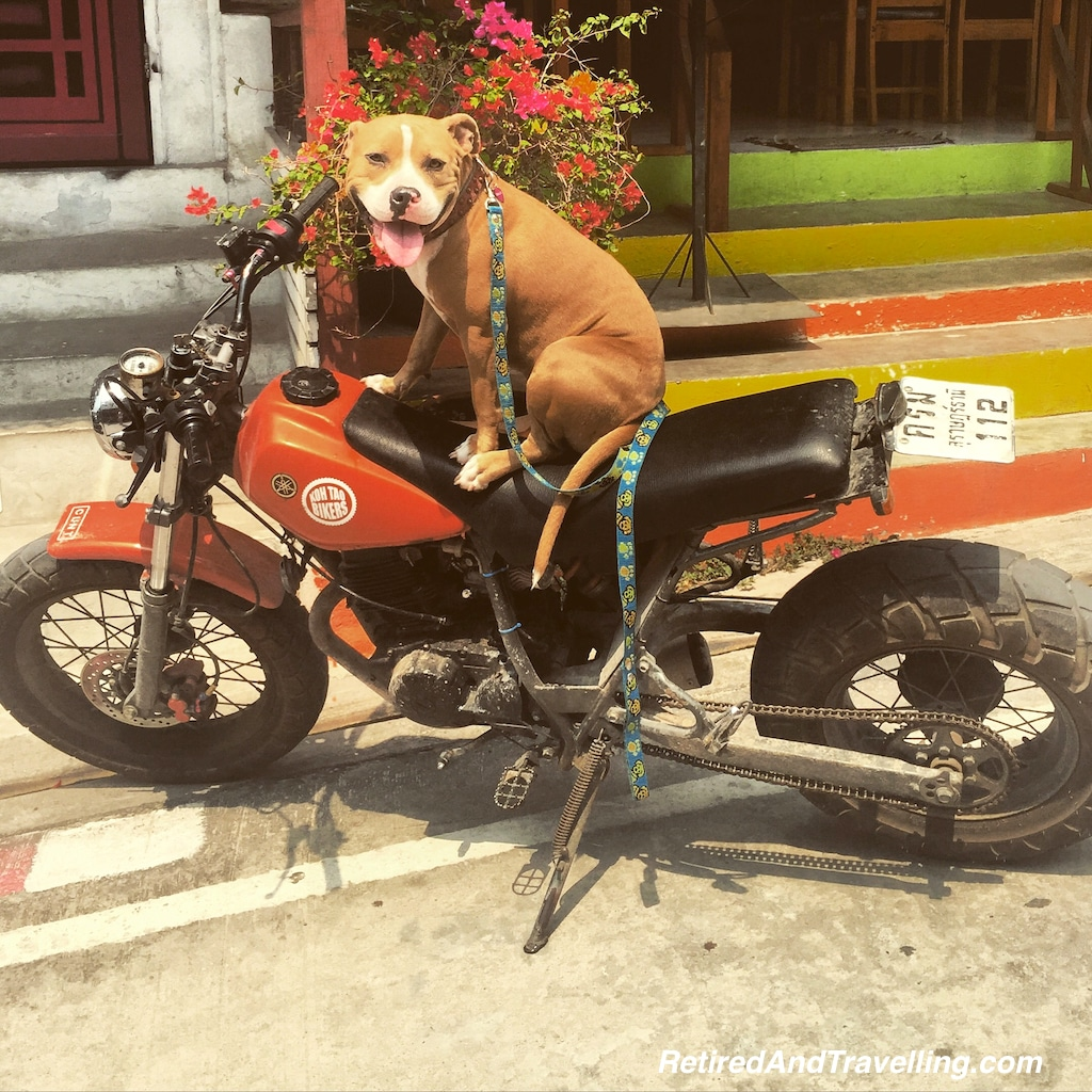 Dogs and Bikes Koh Tao - Advance Travel Scout.jpg