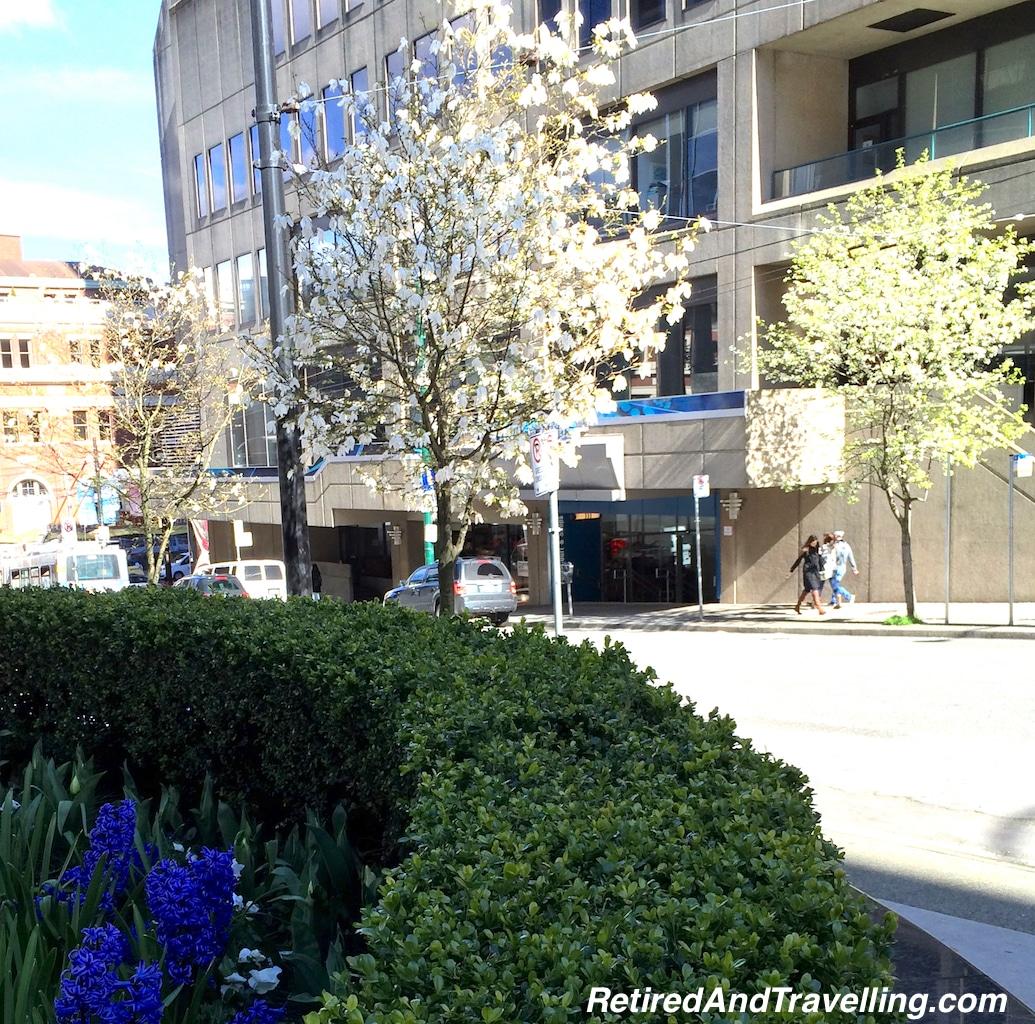 Spring Blooms - Next Stop Australia.jpg