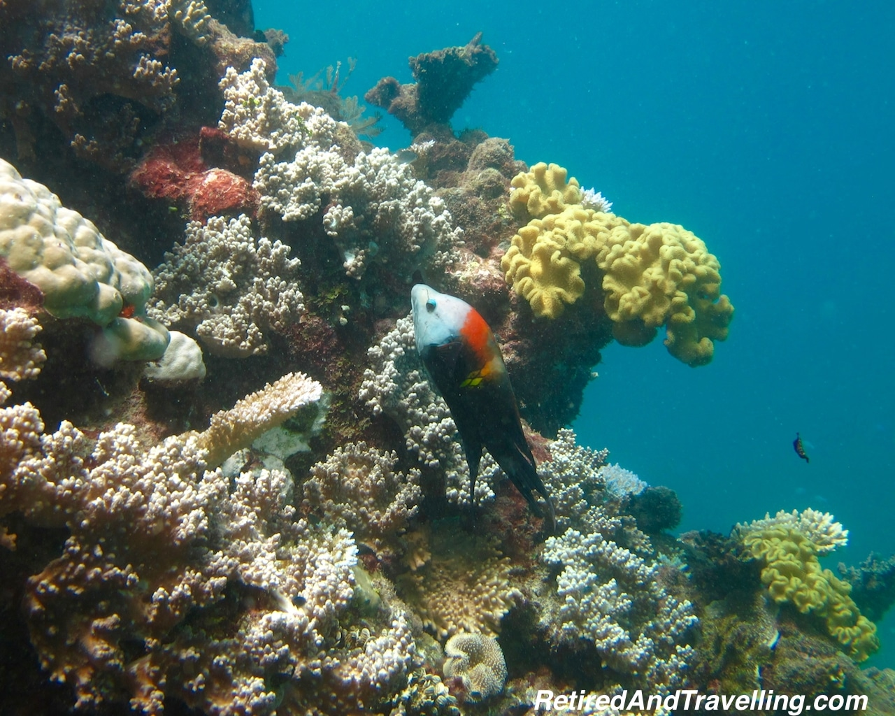 Scuba - Snorkel or Scuba the Great Barrier Reef.jpg