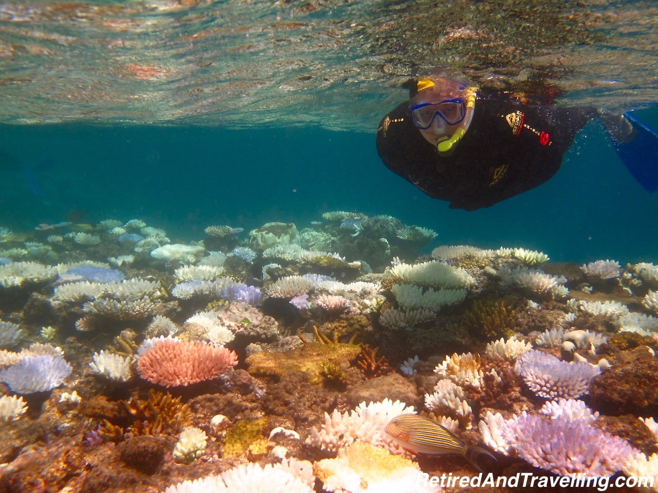 Snorkel - Snorkel or Scuba the Great Barrier Reef.jpg