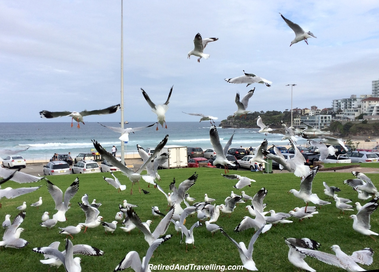 Birds at Bondi Beach - South To Bondi Beach.jpg