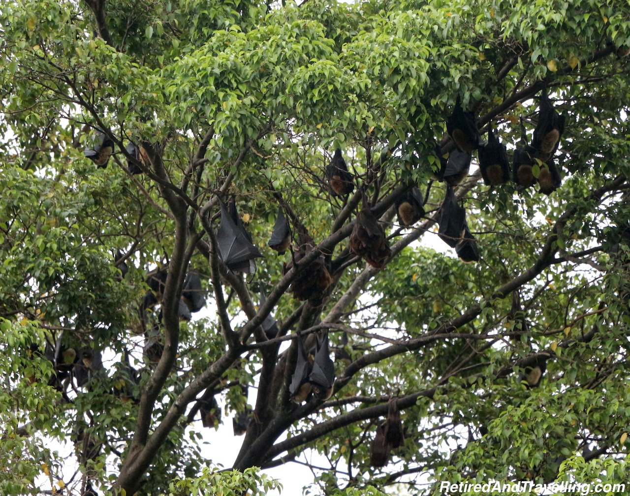 Cairns Bats - Cairns Travel Break.jpg