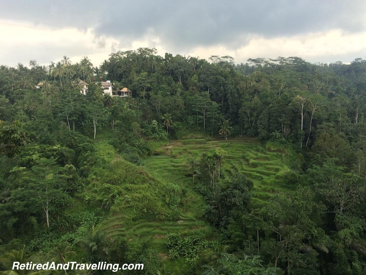 Rice Terraces Ubud - Bali Paradise.jpg