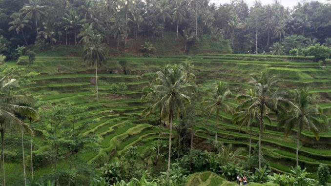 Ubud Treasures.jpg