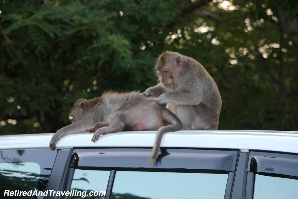 Monkeys - Sunset at Uluwatu.jpg