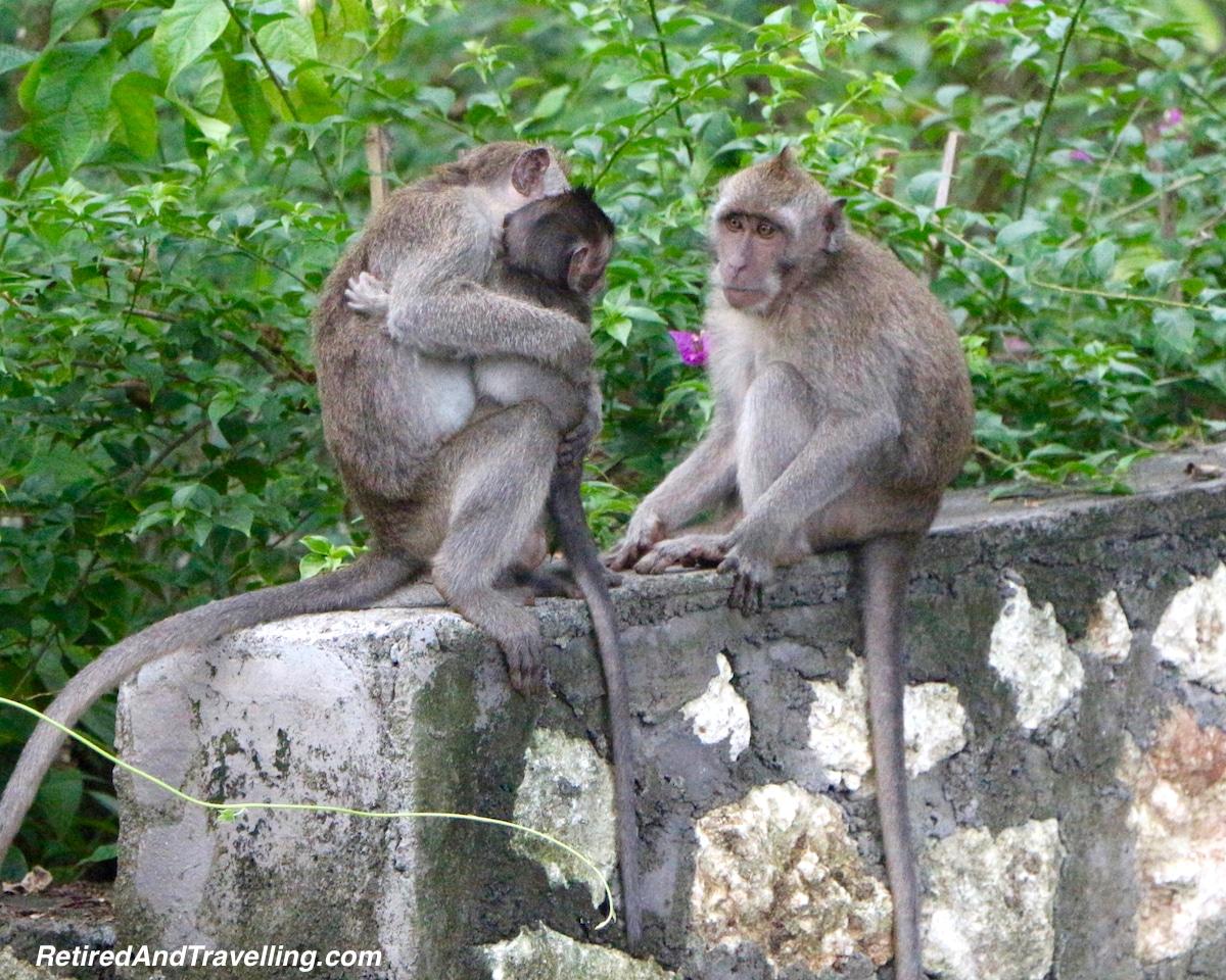 Monkeys at Uluwatu Temple - Temples of Bali.jpg