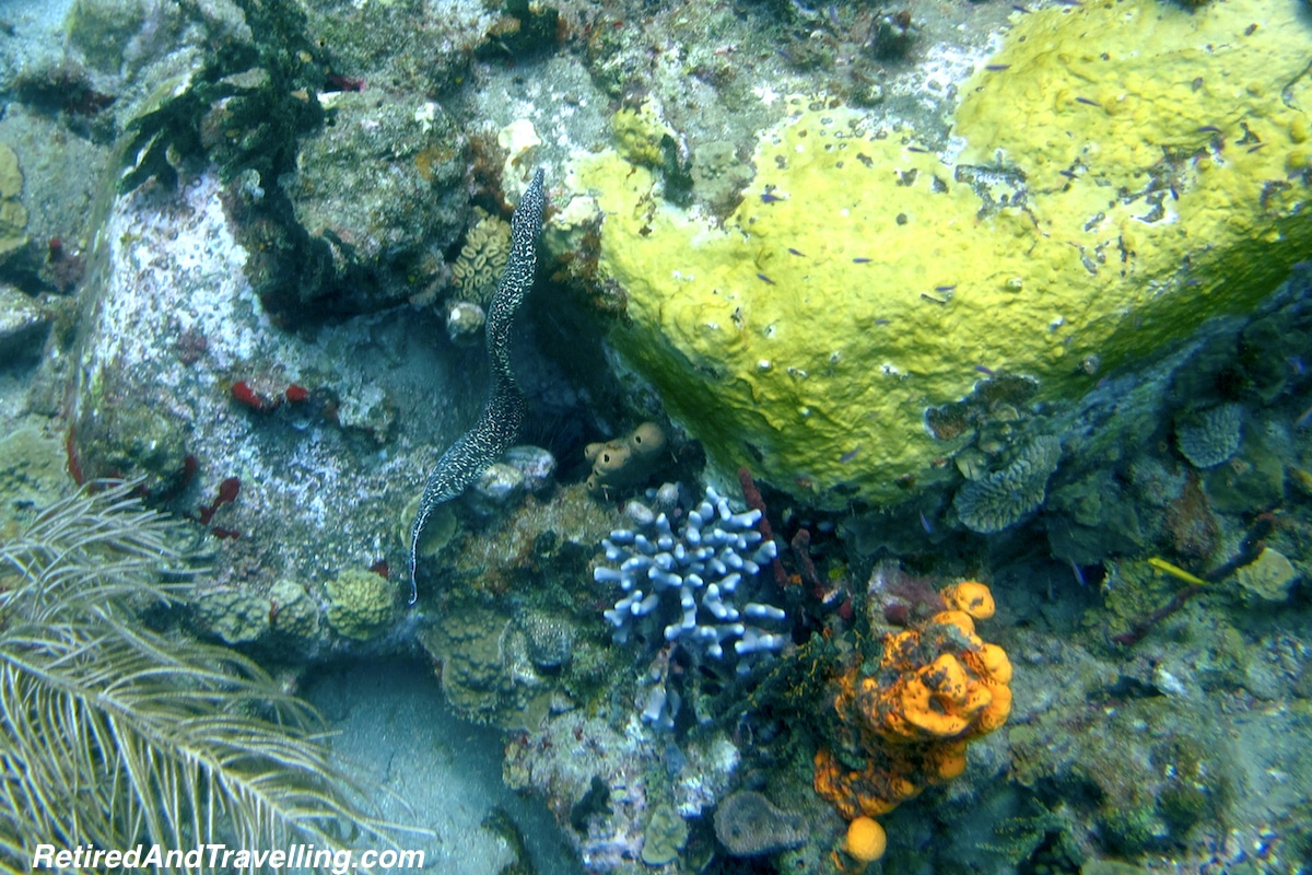 Black Spotted Eel - Scuba Diving In St Lucia.jpg