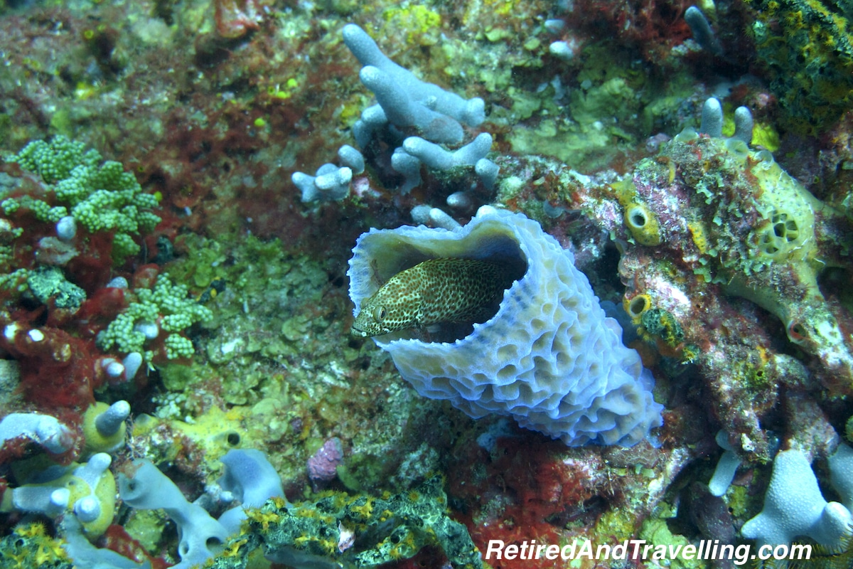 Bright Coral - Scuba Diving In St Lucia.jpg