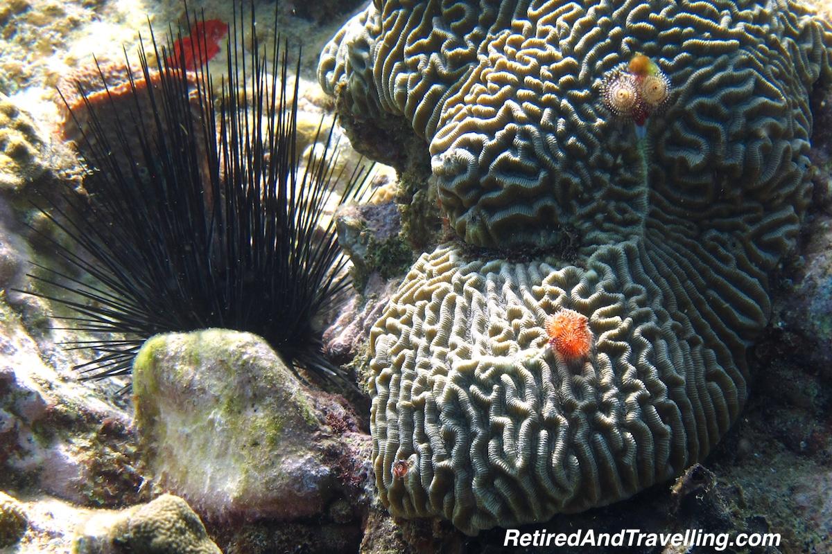 Brain Coral - Scuba Diving In St Lucia.jpg