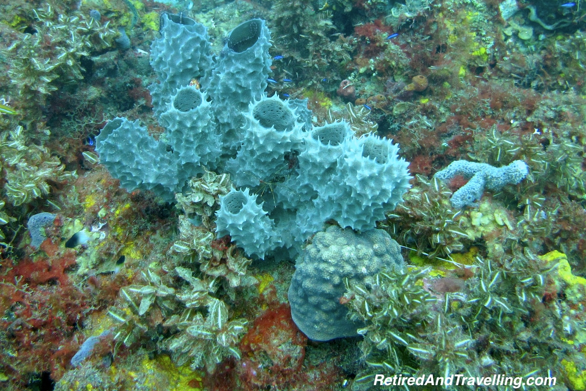 Cactus Coral - Scuba Diving In St Lucia.jpg