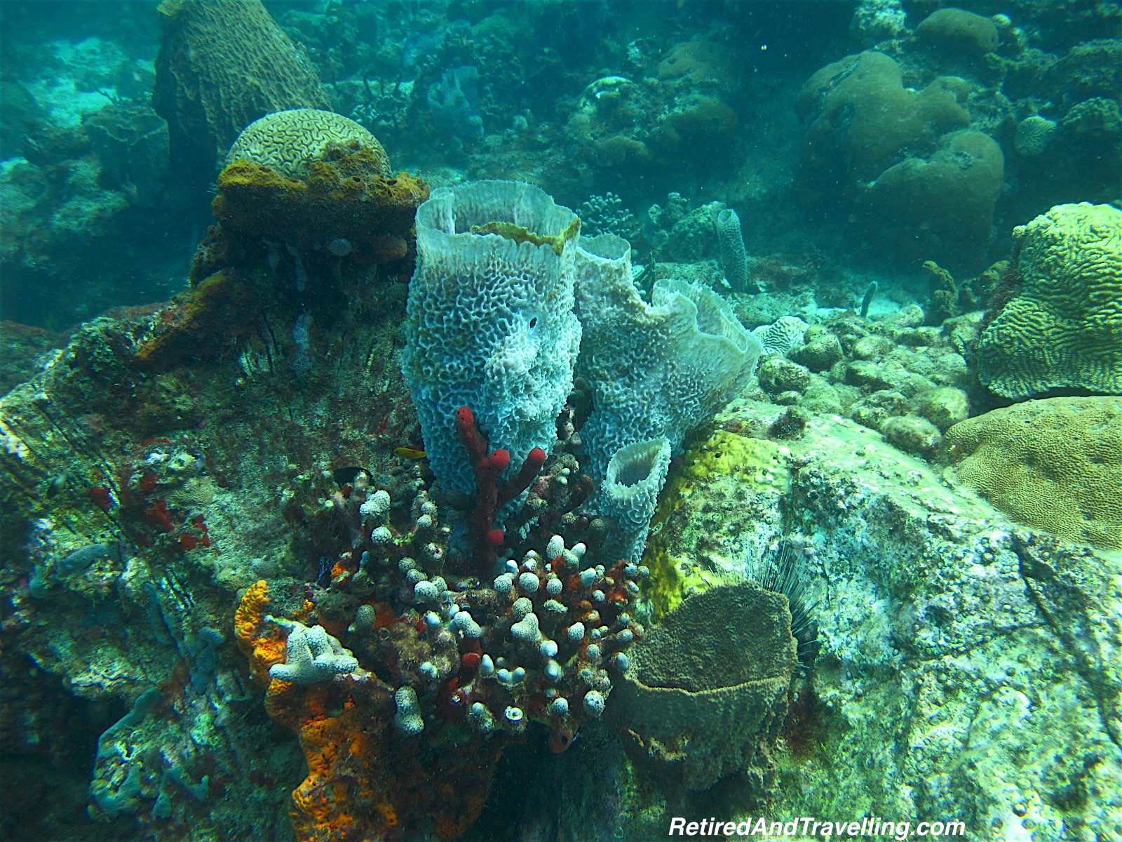 Coral and Sponges - Scuba Diving In St Lucia.jpg