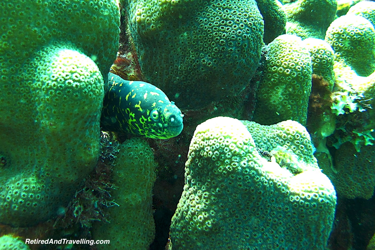 Green Spotted Eel - Scuba Diving In St Lucia.jpg