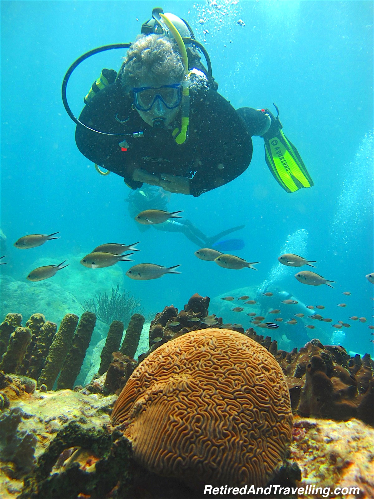 Brain Coral - Scuba Diving In St Lucia.jpg